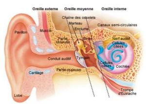 appareil-auditif-audioprothesiste-choix-de-prothese-auditive